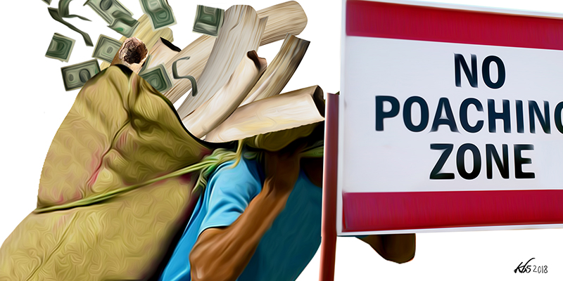 POACHING: The link between money laundering and organised wildlife crime