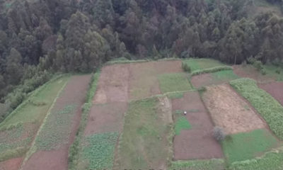 Deforestation: 48 Years of Kenya's Unspoken Disaster