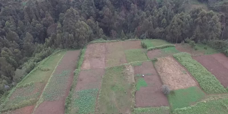 Deforestation: 48 Years of Kenya's Unspoken Disaster