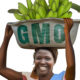 The Case Against GMOs: Cautionary Tales From Uganda