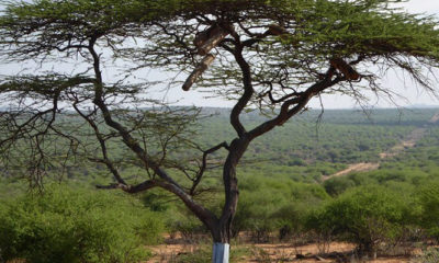Laikipia - Tradition, Tourism and Distancing