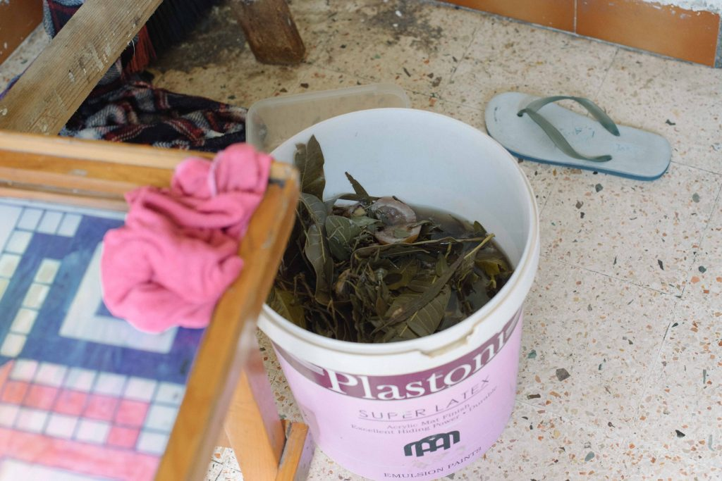 Moringa, a medicine used by the rescued women.