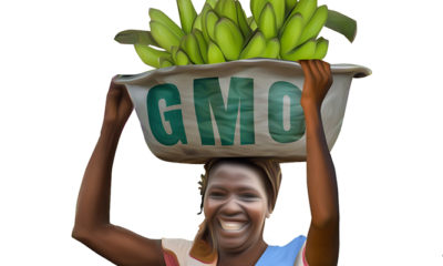 Seeds of Neo-Colonialism: Why GMO's Create African Dependency on Global Markets