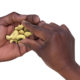 What Ails the Cashew Nut Sector in Kenya?