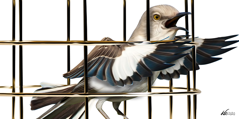 Fifty Years Later, The Caged Bird Still Sings