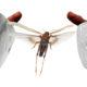 Combatting the Desert Locust Menace