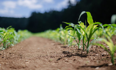 Punitive Government Policies Jeopardise Kenya's Food Security