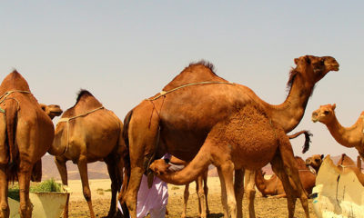 Deedha: How Pastoralists Communities Are Effectively Managing Drought and Conflict